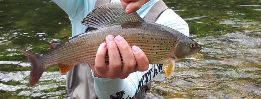 Flyfishing Salzburg Austria Guiding Urs Zulian