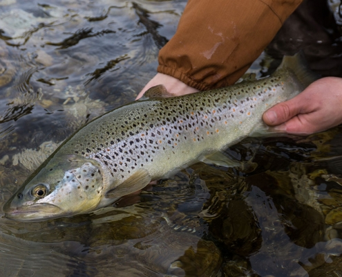Ischler Ache Fly fishing Austria Guiding