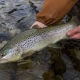 Ischler Ache Fly fishing Austria Guiding