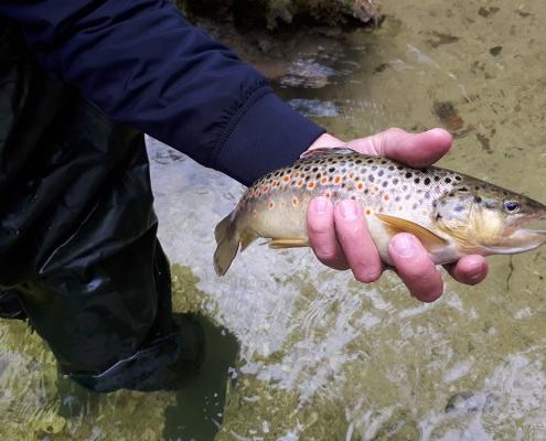 Weissenbach Fliegenfischen Austria Guiding